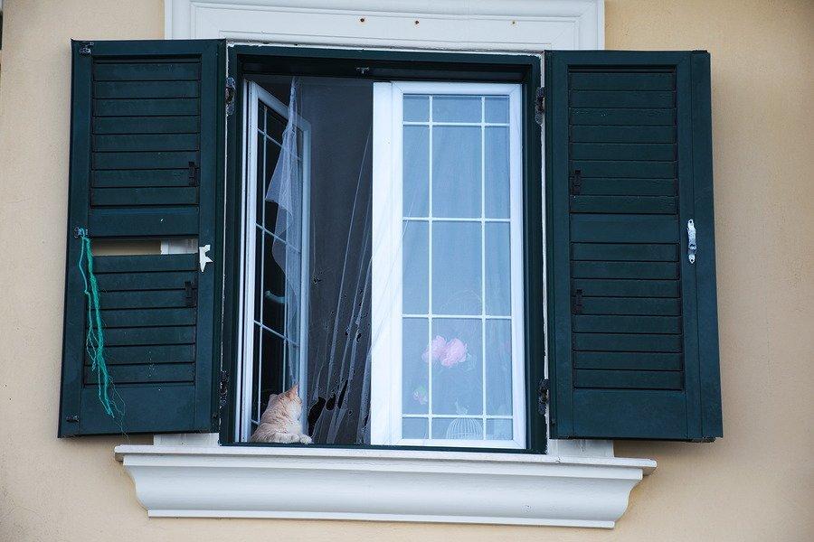 cat window flower